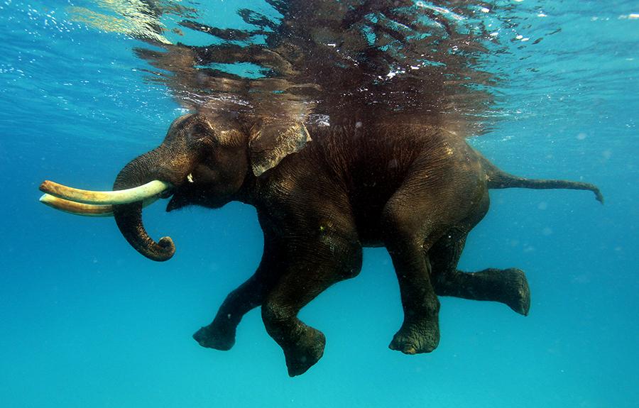 slon-pod-vodoy