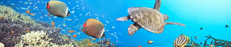 Фото красивых рыбок на рифе