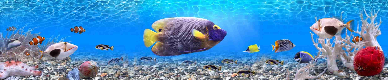 Фото дайвинг с красивыми рыбками