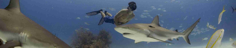 Фото фридавера с акулой