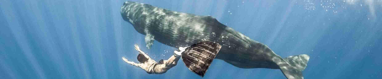 Фото фридайвинг с китами