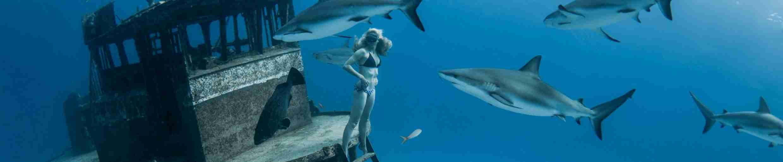 Фото фридайвинг акулы и девушка без ласт