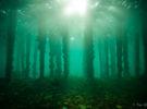 Документальный фильм о 50000-летнем подводном лесе в Алабаме