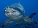 Нападение акулы на острове Кокос