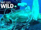Очередное спасение черепахи от оков человеческого мусора