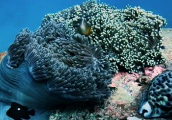 Удивительный дайвинг на Андаманском море