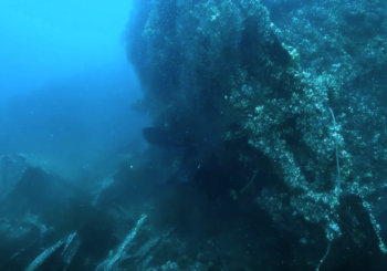 Затонувшие корабли острова Карамзина