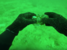 Кто уничтожает мидии в Черном море?