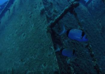 Погружение к затонувшему кораблю на Кипре