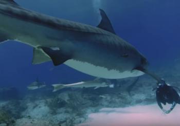 Законы акульего мира