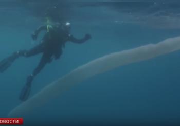 Необычный подводный житель у берегов Новой Зеландии