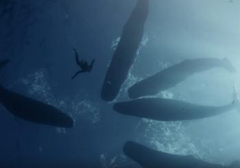«На одном дыхании вокруг света». Впечатляющее видео от Гийома Нери и Жюли Готье
