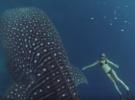 ТОП-10 наименее опасных акул