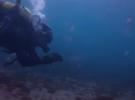 Пляжи Израиля наводнили медузы