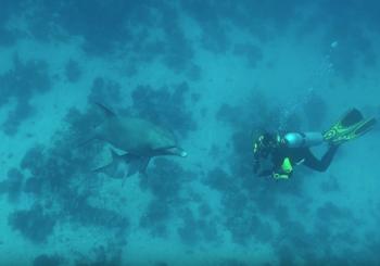 Дайвинг с дельфинами в Красном море