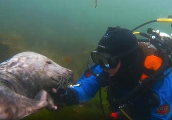 Тюлень пожал руку дайверу у побережья Нортумберленда