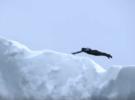 Клифф-дайвинг с айсберга в Антарктике
