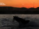Документальный фильм про акул от National Geographic