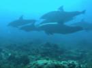 Дайвинг с дельфинами у острова Мнемба