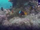 Ученые нашли способ восстановить коралловые рифы