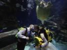 В Когалыме молодожены смогут пожениться в аквариуме с акулами