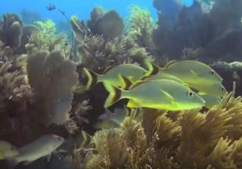 Таинственные пещеры и затонувшие корабли Багамских островов