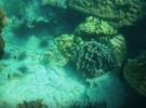 Подводный мир острова Ко Липе, Таиланд