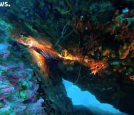 Морское биоразнообразие на пороге беды