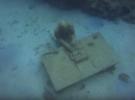 Подводный мир Гренады