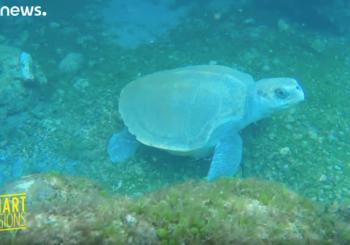 Морские черепахи помогают разгадать тайны тропических циклонов
