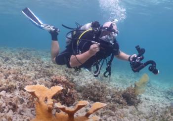 Восстановление кораллов в Морском парке St. Croix East End