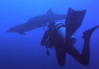 Дайвинг с дельфинами в Рангироа