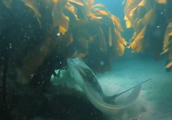 Подводный мир Северного острова Новой Зеландии