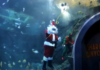 Санта-Клаус в аквариуме Сент-Луиса