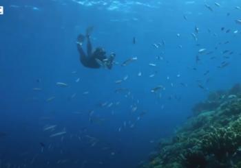 Сотни добровольцев помогают нанести на карту Большой Барьерный риф