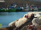 Италия очистит Адриатику от пластиковых сетей