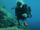 Как показать морских животных под водой