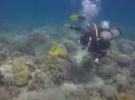 Дайв-инструкторы собирают мусор в море, чтобы спасти морских животных
