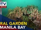 Дайверы открыли коралловый сад в Манильском заливе
