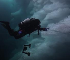 Редкие морские существа под айсбергами
