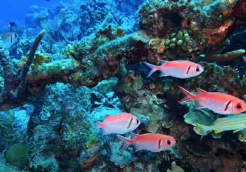Подводный мир острова Бонэйр в сентябре