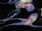 25 потрясающих фотографий осьминогов