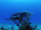 В поисках дружелюбного дикого дельфина Джоджо!