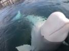 Умные киты